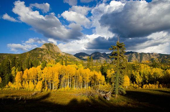 Colorado Fall Aspens in full bloom!