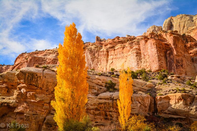 Poplars and Fruita Cliffs