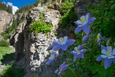 Wildflowers-2015-25