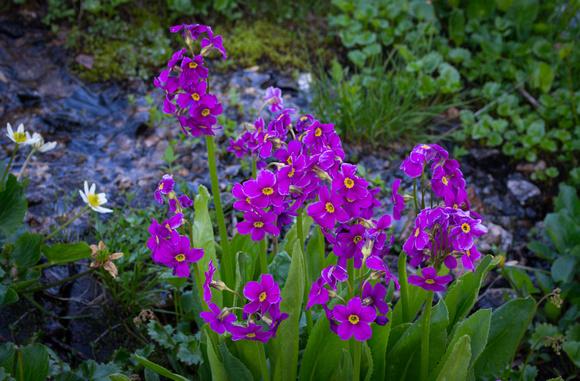 Wildflowers-2015-8